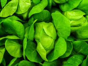 Leaf lettuce greens vegetable fresh